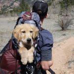 Pessoas preferem estar com animais do que com amigos e familiares