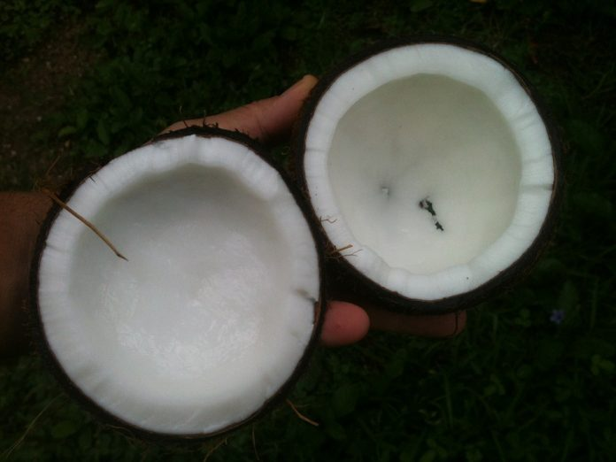 Benefícios do óleo de coco mitos e verdades