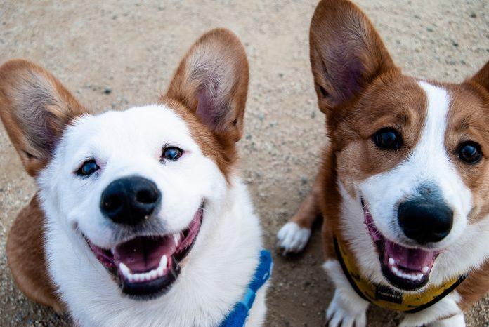 A conexão entre animais de estimação e seus donos é maravilhosa