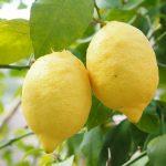 Água com limão em jejum pode transformar sua saúde, beba regularmente