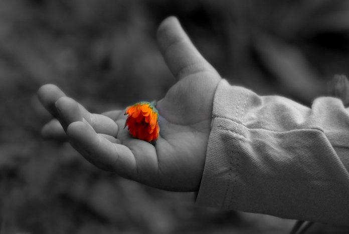Somos ingratos com o Criador quando tratamos mal tudo aquilo que deveríamos tratar bem
