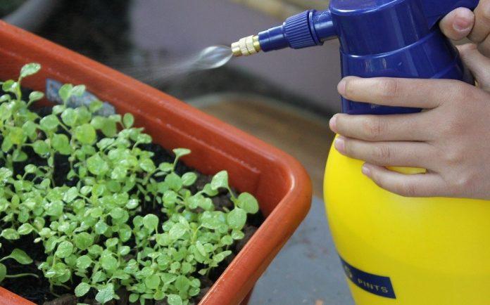 7 inseticidas caseiros para usar em casa e no jardim