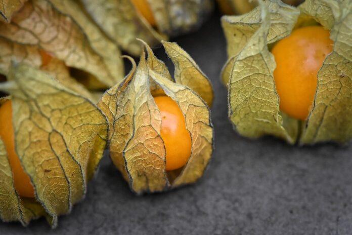 Esta fruta milagrosa tem alta concentração de vitamina C e preserva a saúde