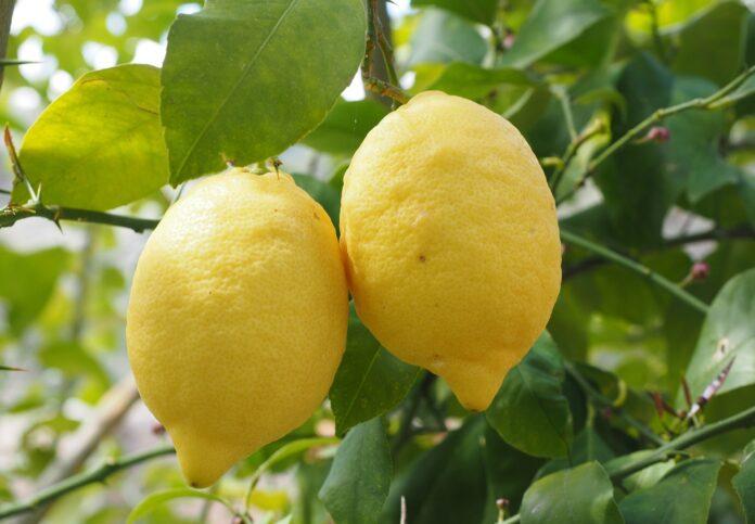 Beba água com limão em jejum para eliminar toxinas e melhorar sua saúde