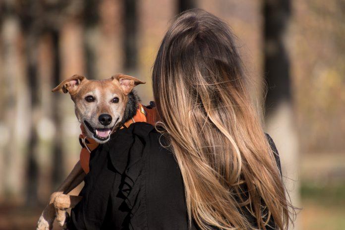 Pessoas do signo Câncer são sortudas e adoram a companhia dos animais