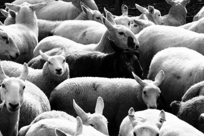 Por vezes a ovelha negra é a pessoa mais sadia da família