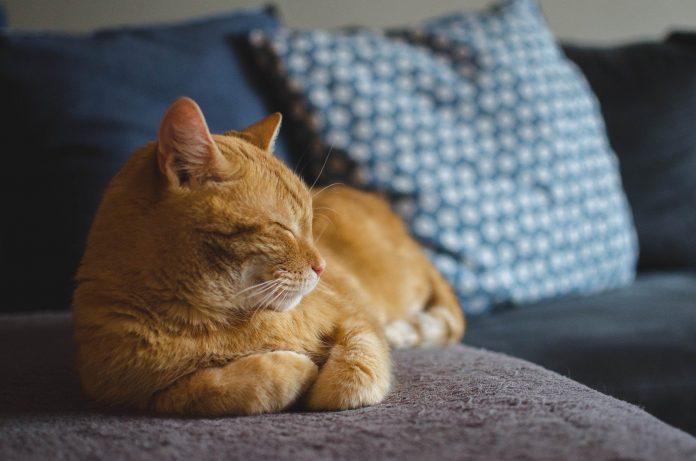 Você sabia que deve avisar seu gato sempre que for sair de casa?